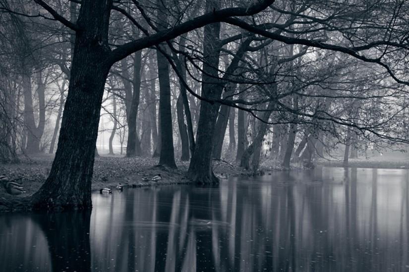 Dark Forest Wallpaper 2560x1920 Free Download Com Imagens