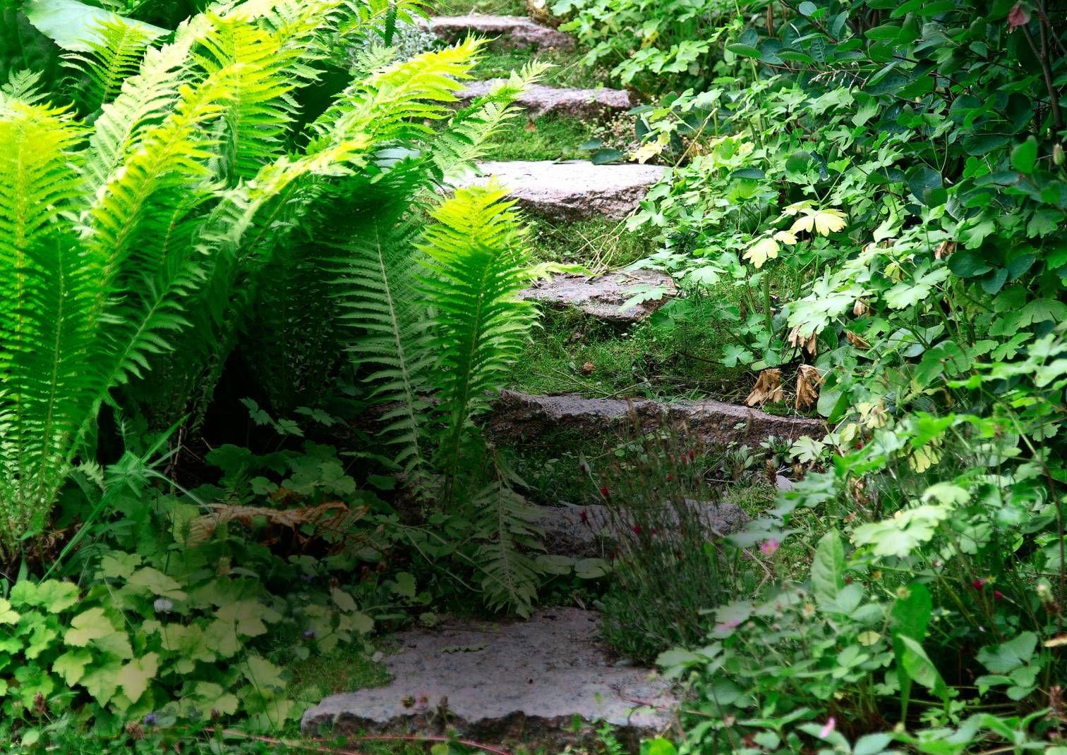 Harmoninen metsäpuutarha syntyy tontin ja ympäristön henkeä vahvistaen ja mukaillen. Katso Meidän talon vinkit.