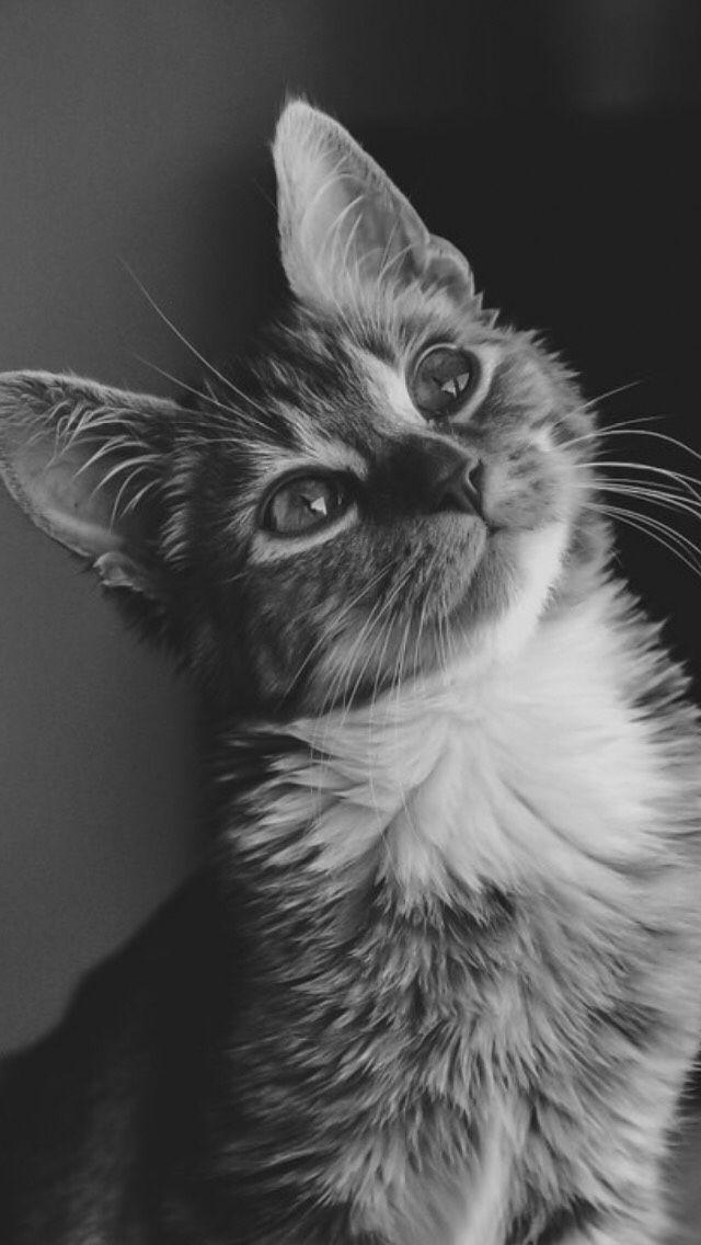 cat wallpaper | Tumblr