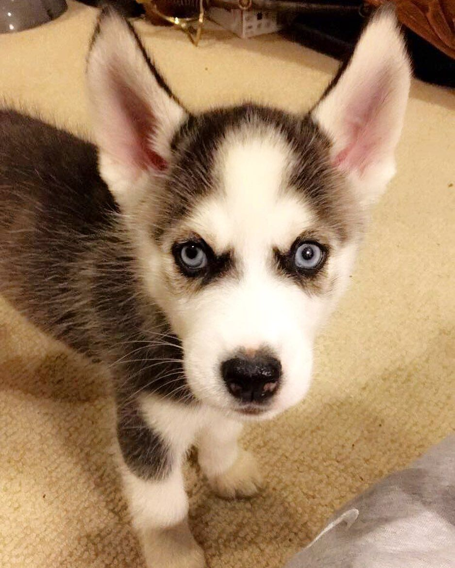 A nice throw back of little floki to start off your day. . . . . . . . .