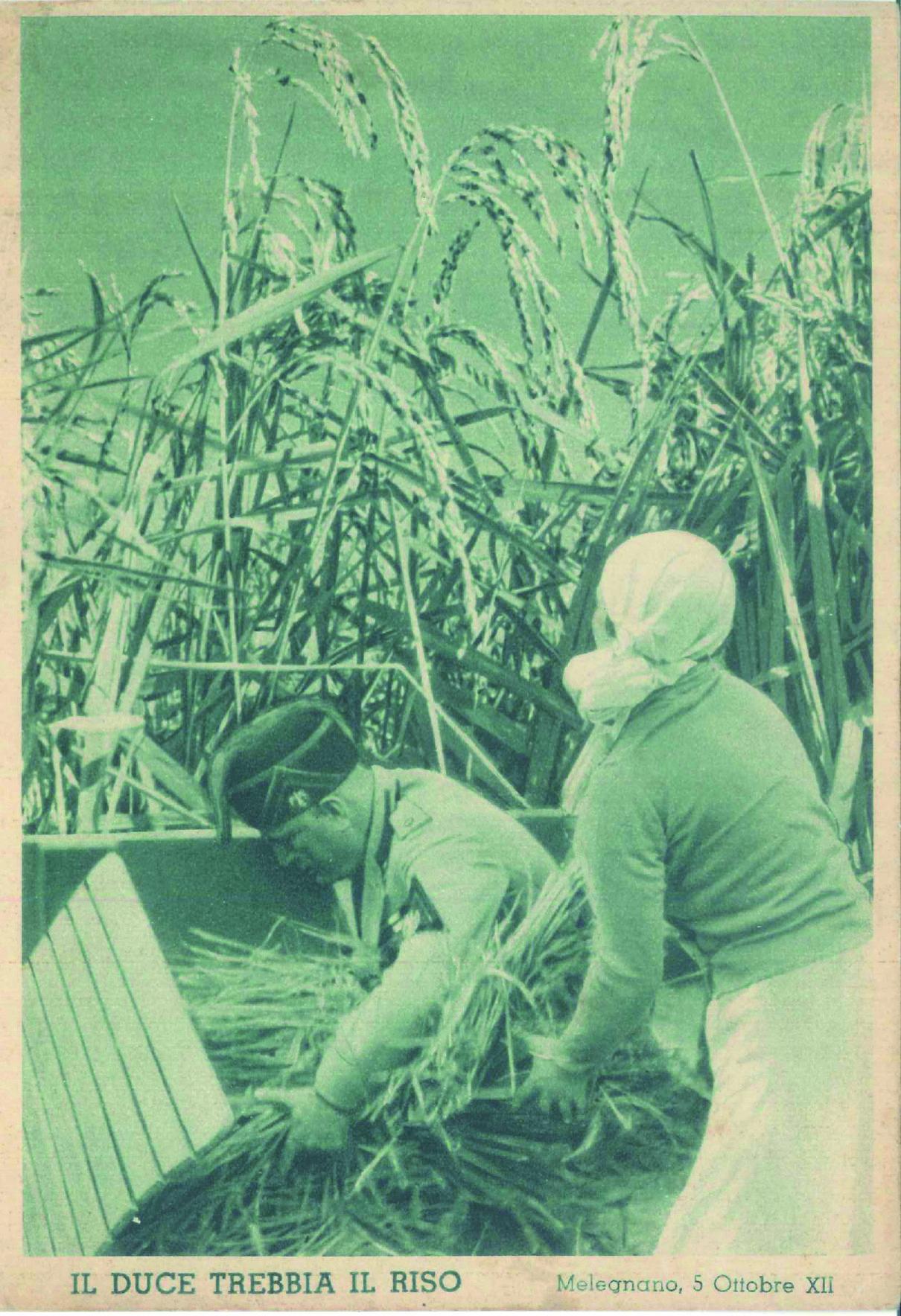 Mussolini ritratto mentre aiuta a trebbiare il riso. #fascismo #Mussolini #Lomellina #storia