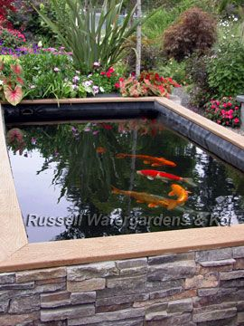 How to build a koi pond russell watergardens koi for Concrete koi pond design