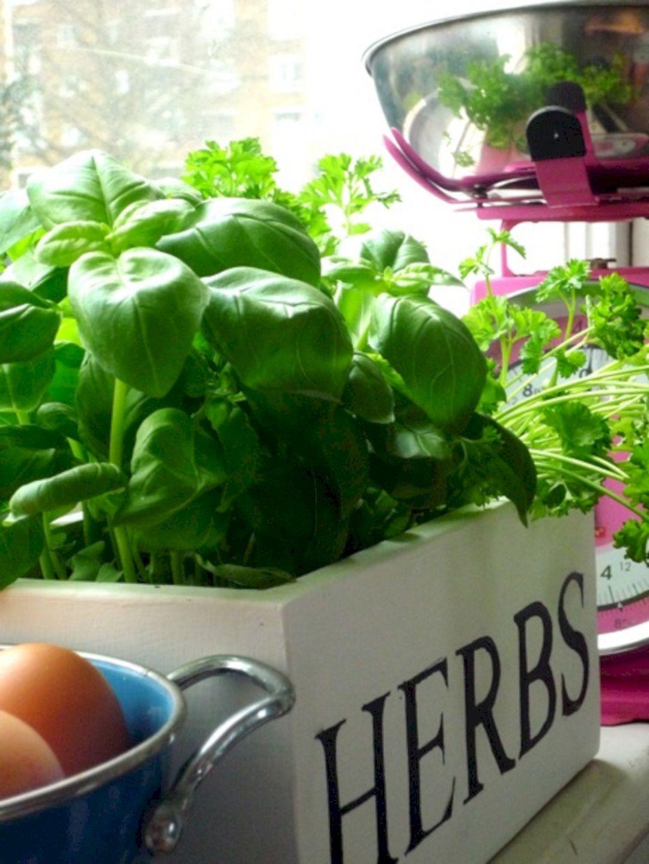 top 20 diy indoor herb garden windows ideas https on indoor herb garden diy wall kitchens id=41885