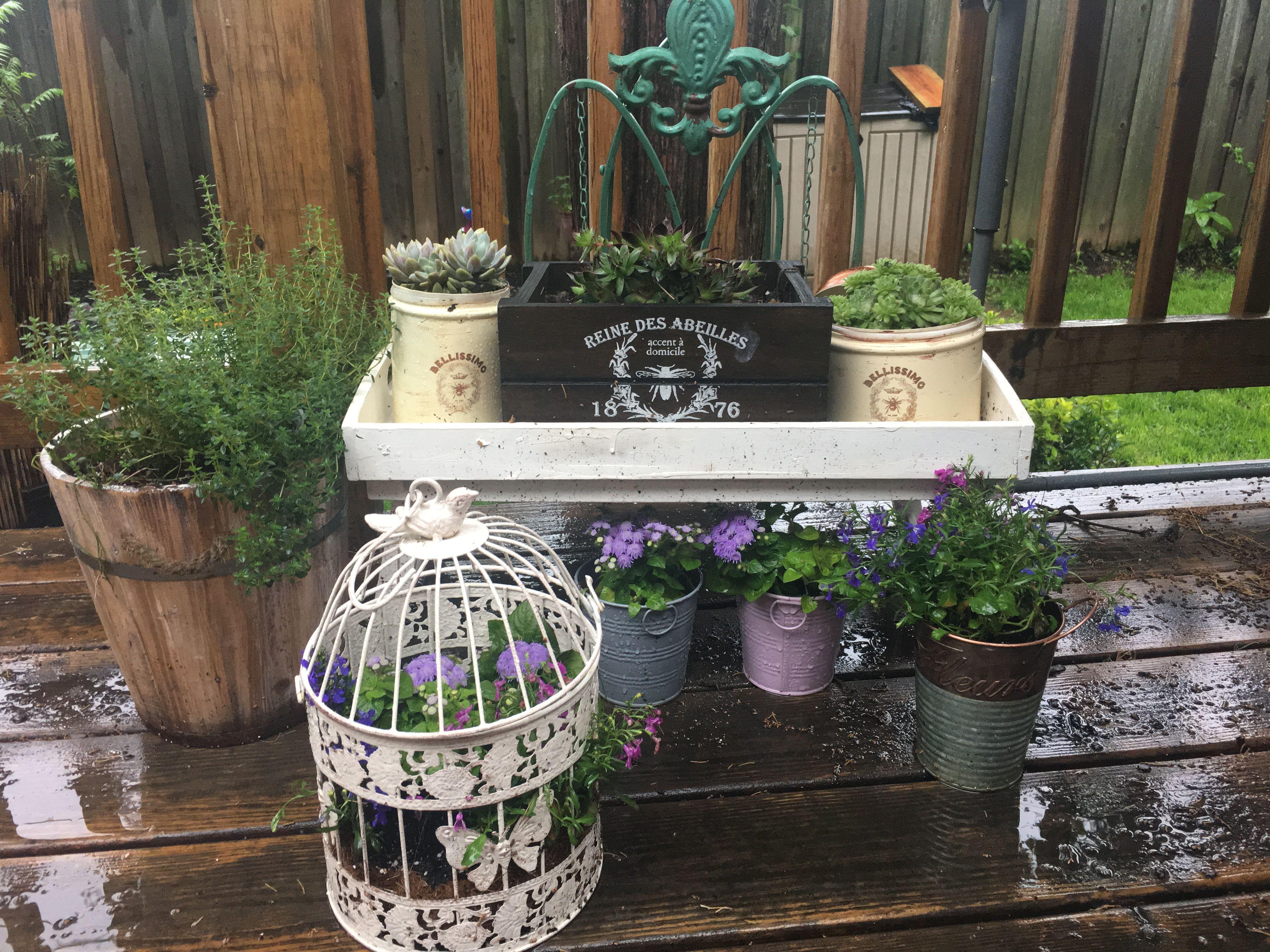succulents birdcage plants gardening flowers DIY