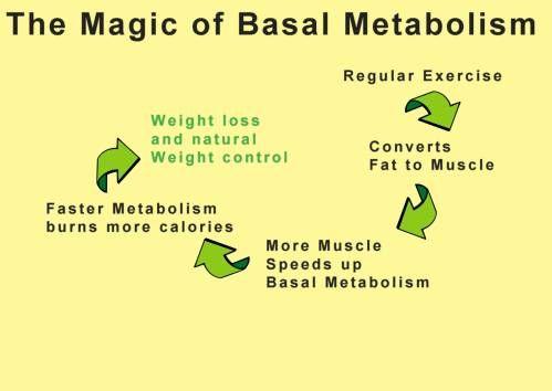 metabolism images | basal metabolism, basal metabolic rate, speed up metabolism