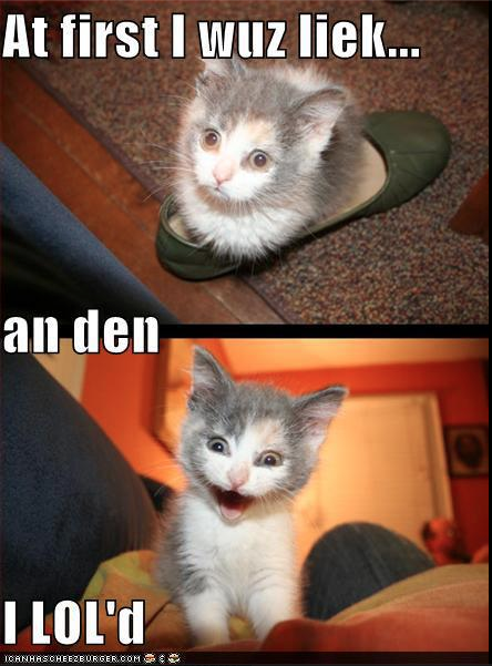 And Then I Lold Smitten With Kittens Pinterest Funny Cats