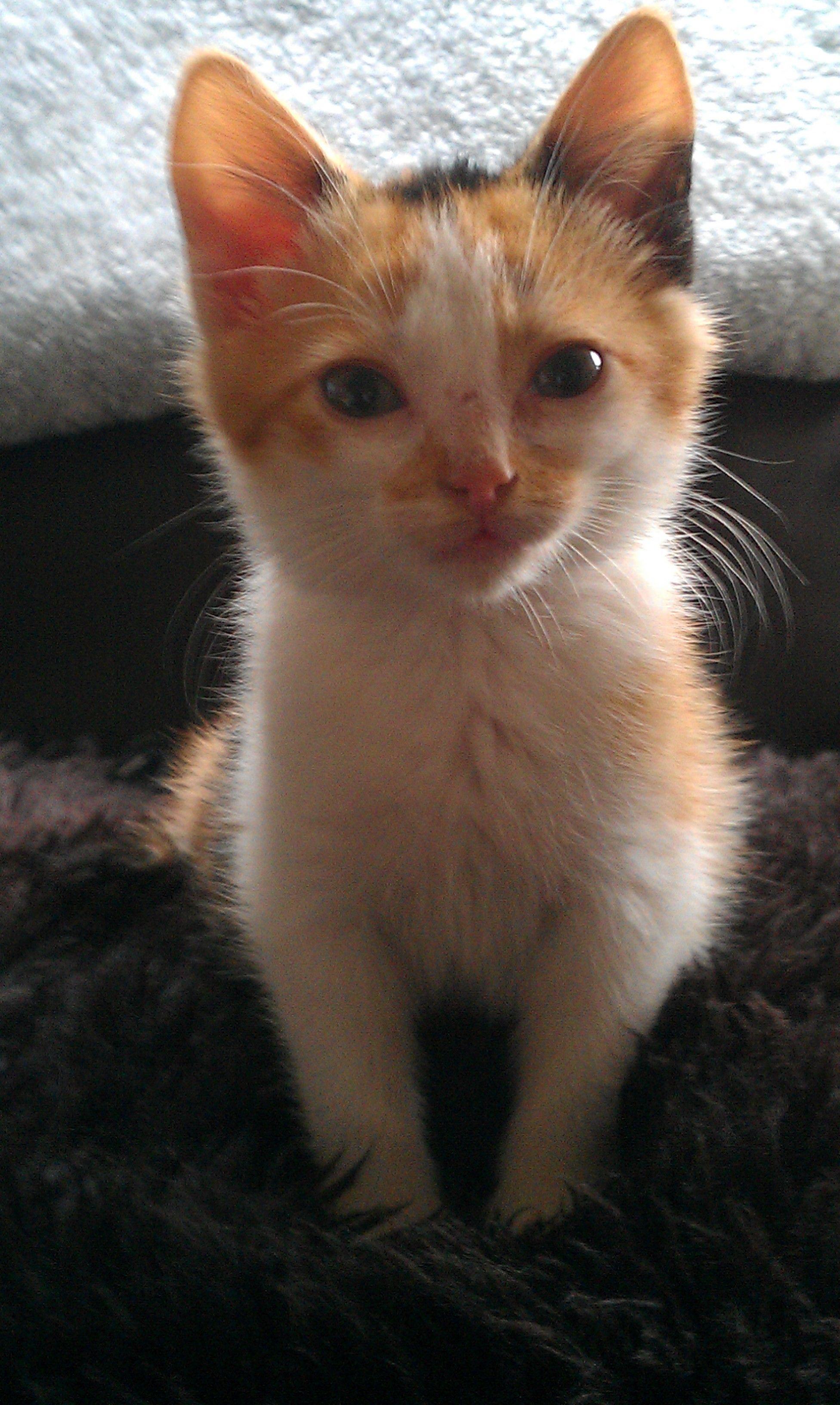 Emily Riddal Our Stray Kitten Animals I Love Cats Kitten