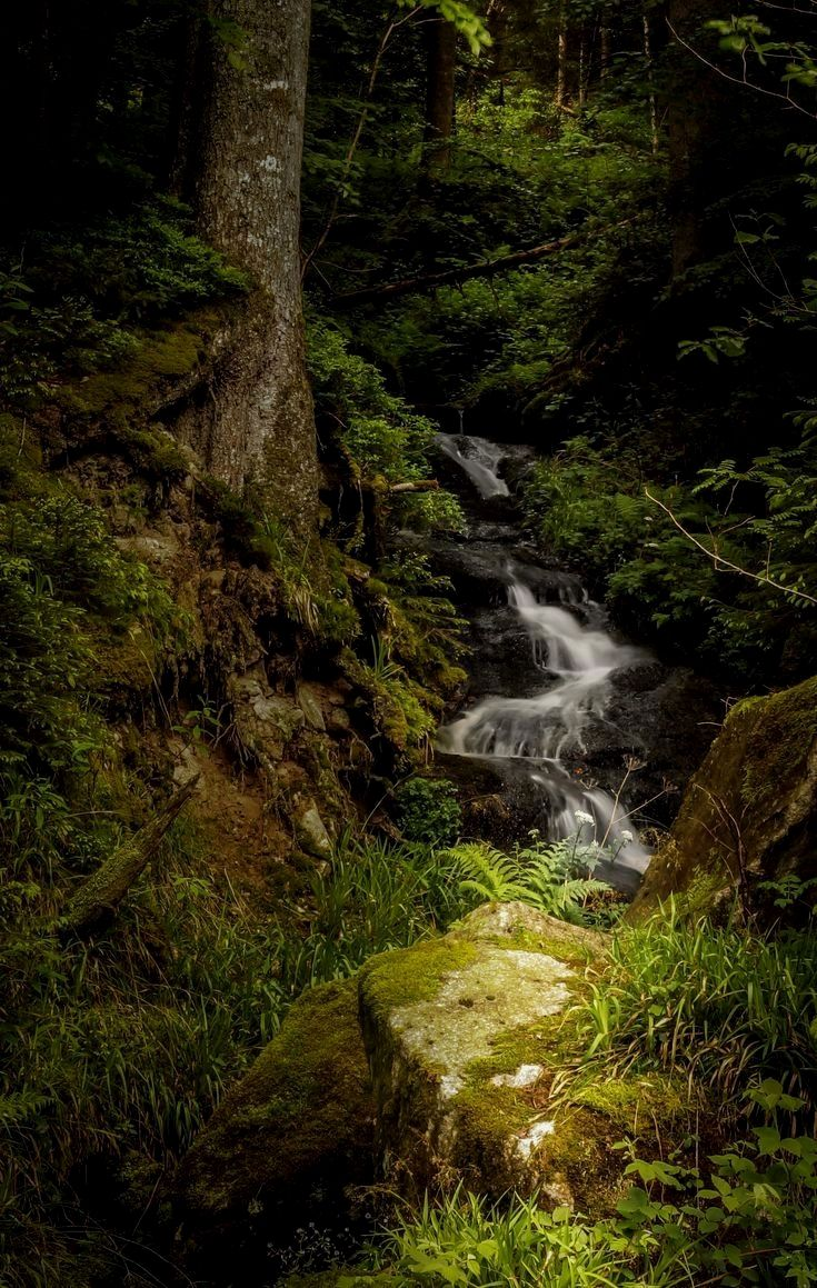 Waterfall in Blackforest, Germany  - by Ajinkya Gote  Germany Have more information on our Site   http://storelatina.com/germany/travelling  #travelinggermany #viagemgermany #Alemanhatravel #viagemalemanha  Germany Travel हमारी साइट पर अधिक जानकारी प्राप्त करें   http://storelatina.com/germany/travelling