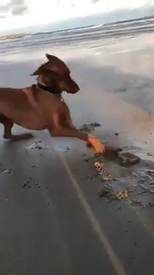 Latest Funny Animals He found a clam... A CLAM!  ❤️ 9
