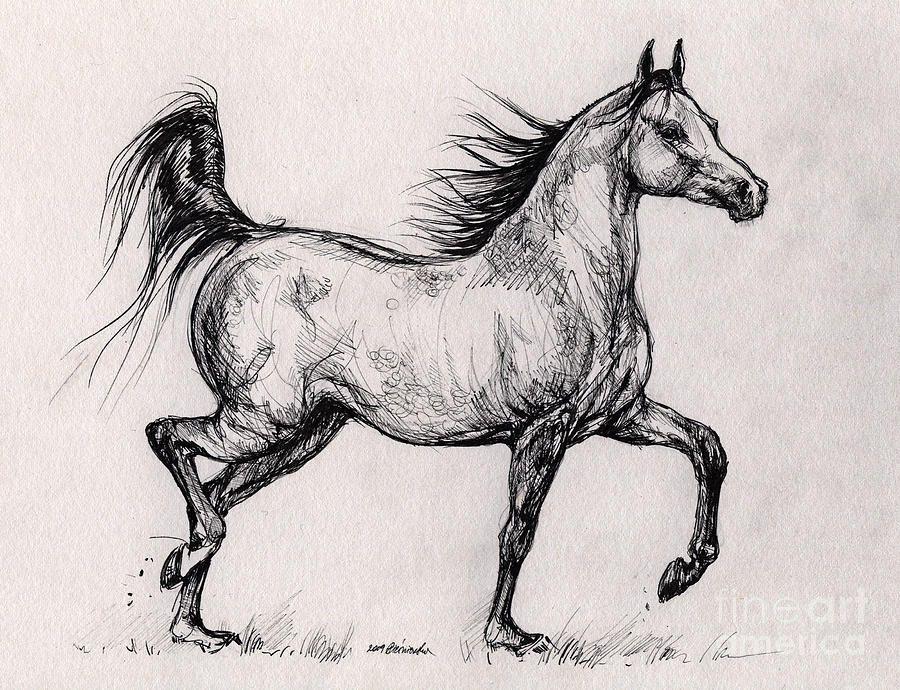 Horses Running Running Bay Arabian Horse Drawing Running Bay