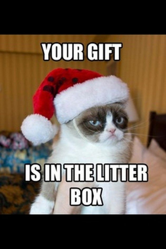 Grumpy Cat s Christmas Compilation (20 Pics) - Click for More ...