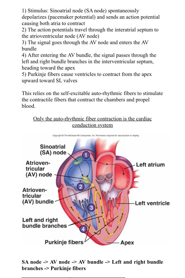 Cardiac conduction system Is the sequence of electrical