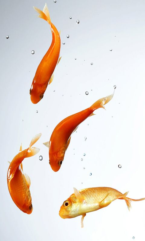 Fishes Jumping Samsung Galaxy Mobile Wallpapers Fish Wallpaper Cute Laptop Wallpaper Goldfish Wallpaper