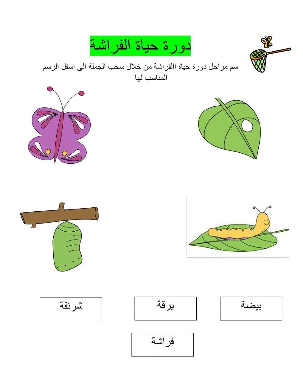 دورات الحياة Online Activity For الصف الثاني You Can Do The Exercises Online Or Download The Worksheet As Pdf Colorful Backgrounds Gift Wrapping Your Teacher