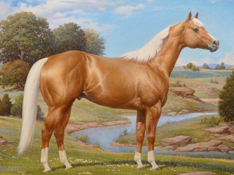 Les Fonds D Ecran Une Peinture D Un Cheval Palomino Cheval Palomino Dessin Cheval Painted Horses