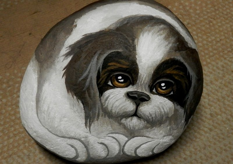 Painted Rock of Shazaam, our Shih Tuz, By Dixie Andrew