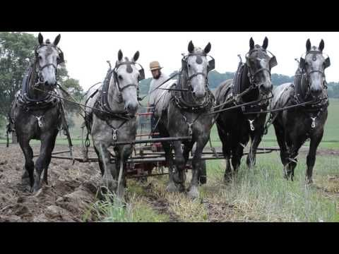 (122) Percheron Horses Plowing Spring 2014 - YouTube