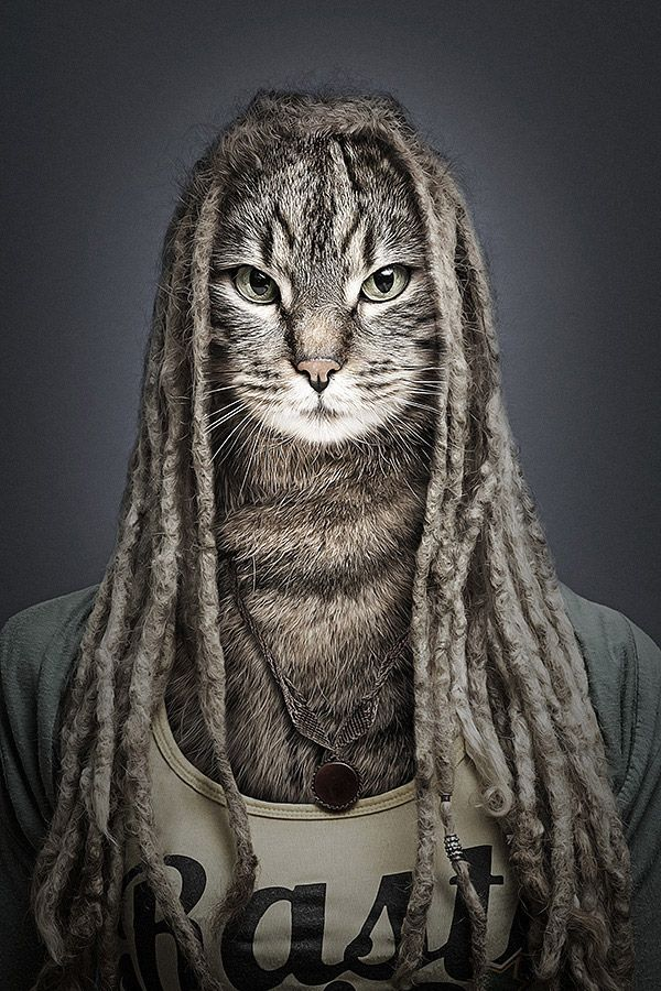 Image result for cat with dreadlocks