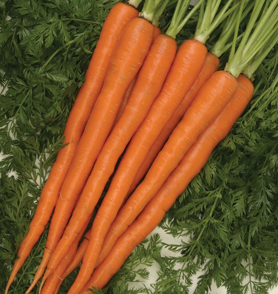 Choose An Imperator Type Sugarsnax 54 Carrot Seeds To 400 x 300