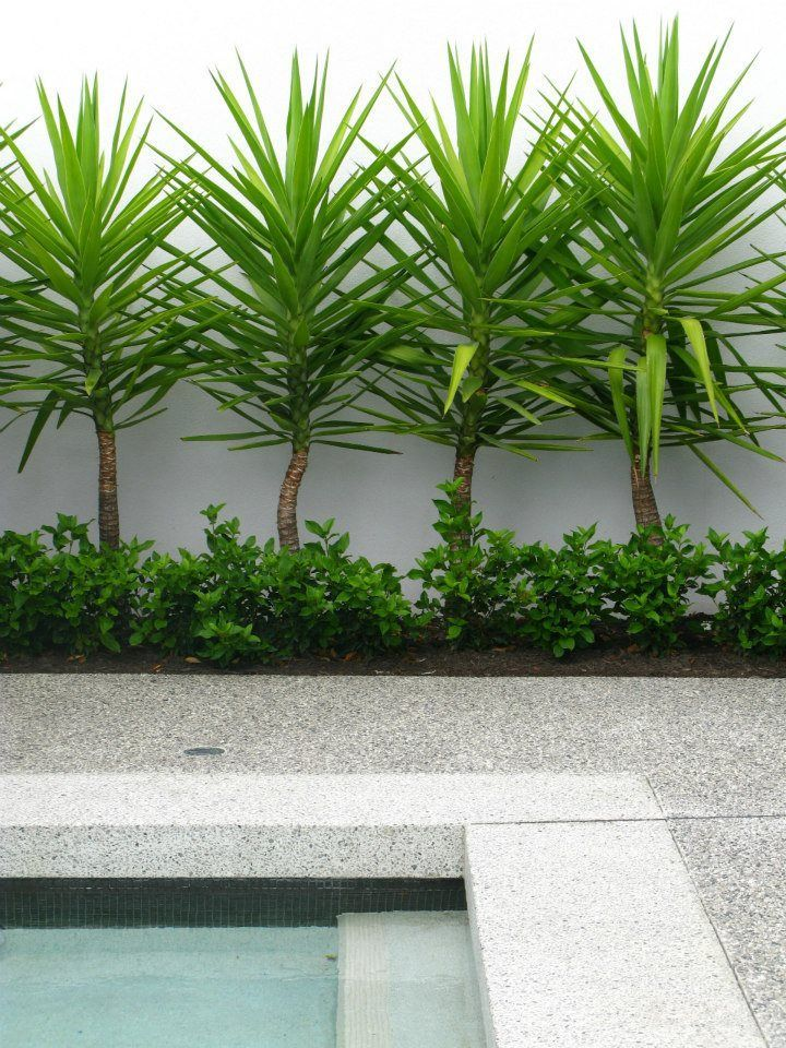 Summer Style Landscaping Around A Pool Love This And Will Be Trying This One Image Result For Plants Around Pool Backyard Landscaping Designs Pool Plants