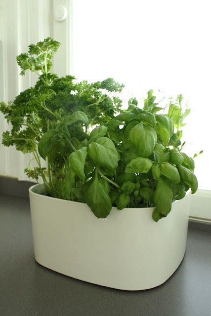 Plastex for herbs.