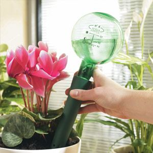 Plant Waterer, Long - Save water with the drip effect.