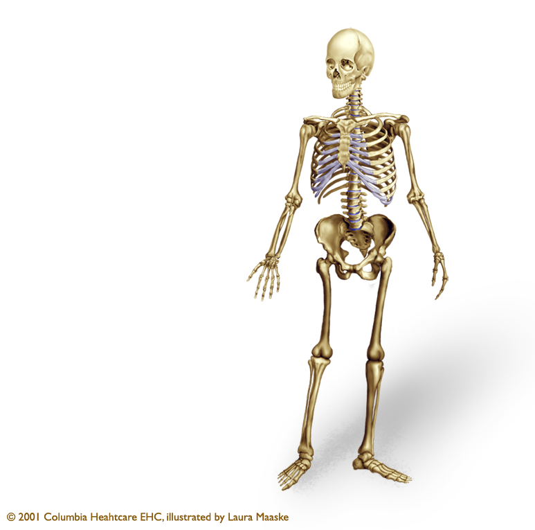 bones of the axial skeleton | click the plus in the upper right ...