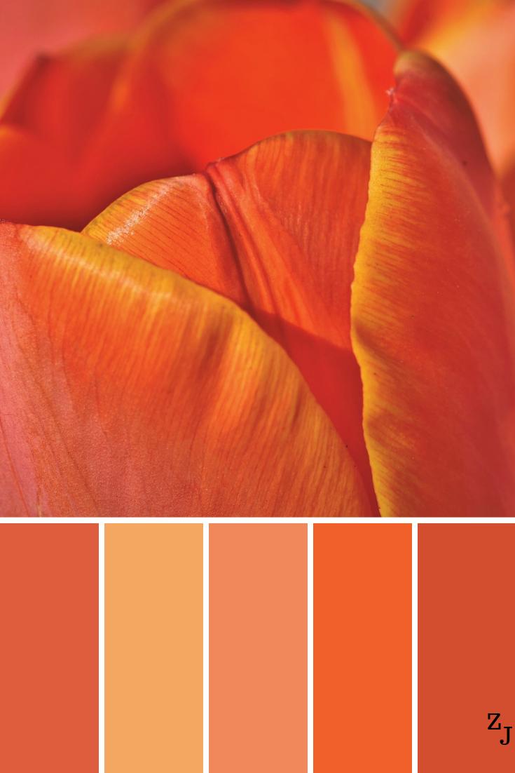 Zj Colour Palette 1245 Colourpalettes Colourinspiration Orange