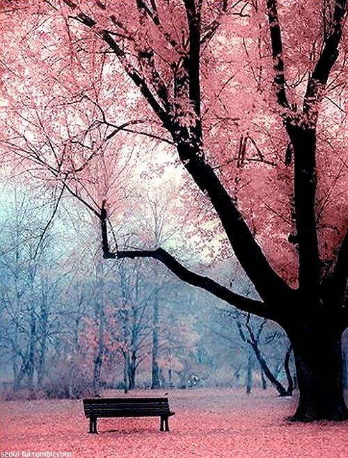 Cherry Blossoms Of South Korea I Really Want To Go There Most Beautiful Places Beautiful Places Beautiful Nature
