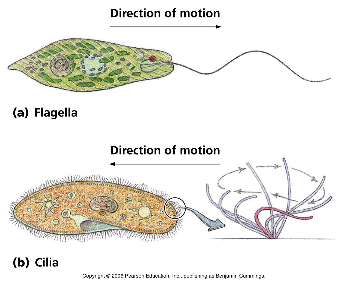 Biology pictures cell biology microb pinterest microbiology biology pictures cell biology pooptronica