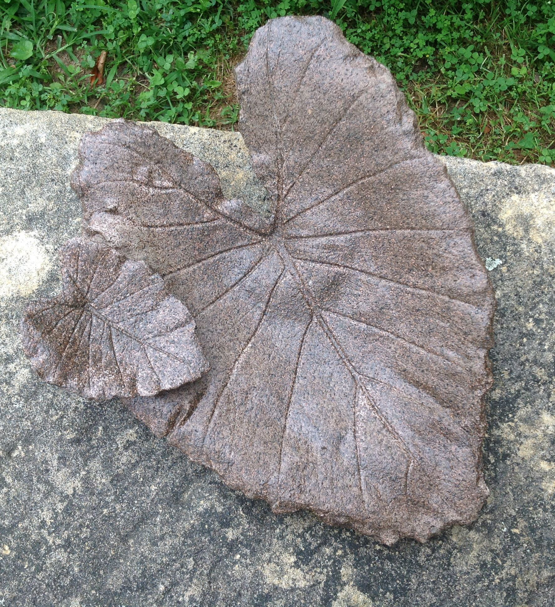 Concrete Leaf Made With Elephant Ear Leaves Spray Painted With Stone Texture Paint And Sealed For Water Concrete Leaves