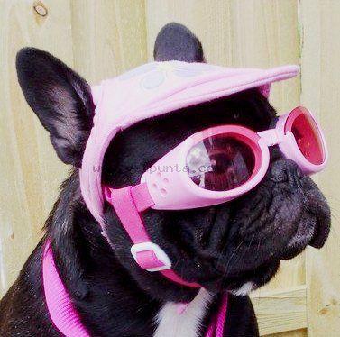 134b5a3d06 Gafas de sol para perro Doggles rosa www.perronality.com   Gafas de ...