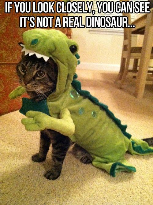 Kittysauraus