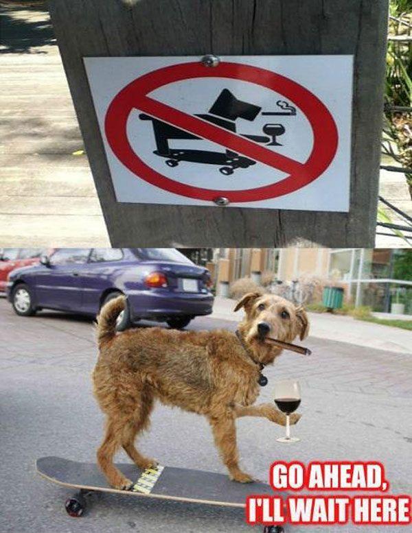 07ca666e2f13b5a3c38d1df3e253f492 no dogs, no drinking, no smoking, no skateboarding a merrier me