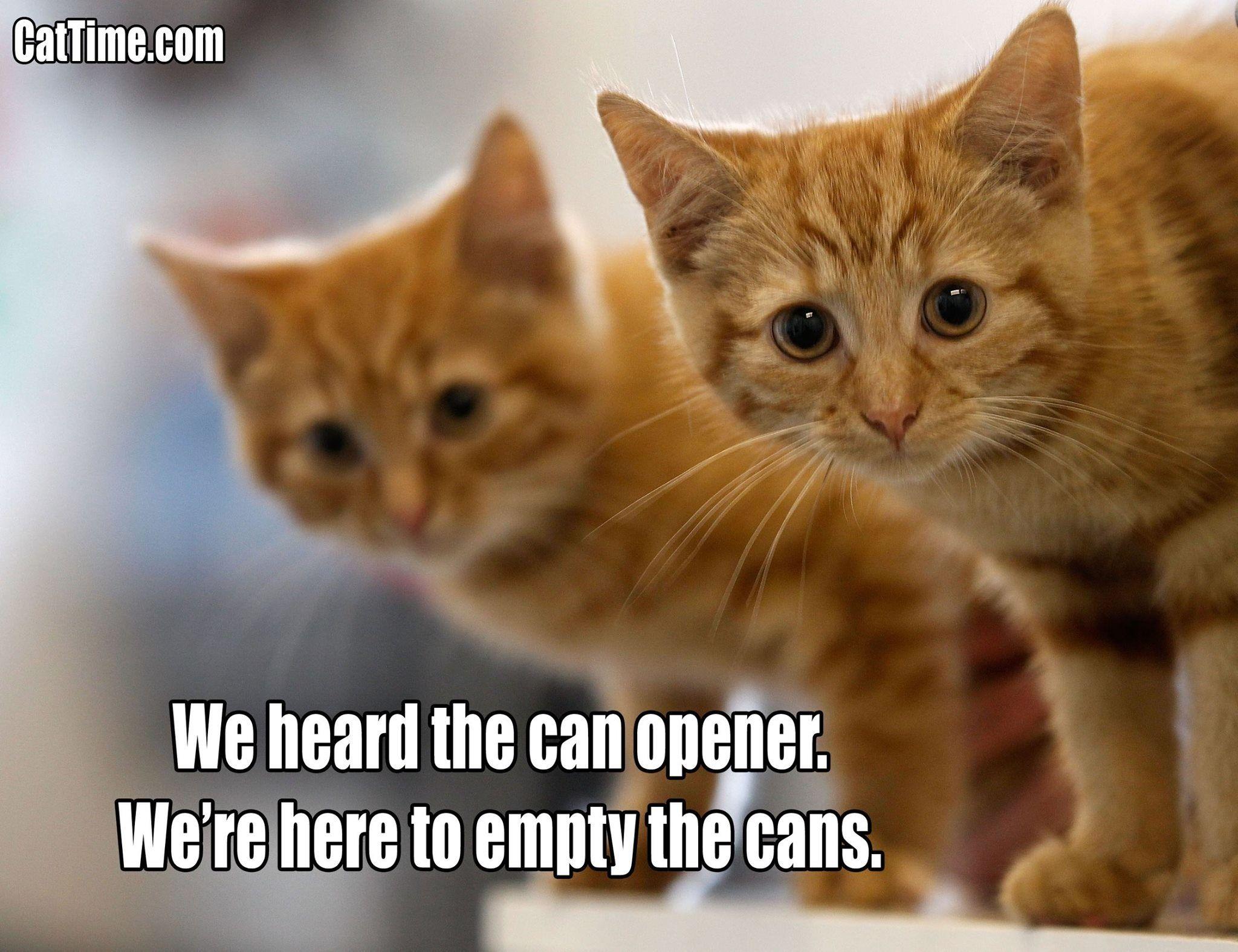 28 funny heartwarming shareworthy cat memes gallery