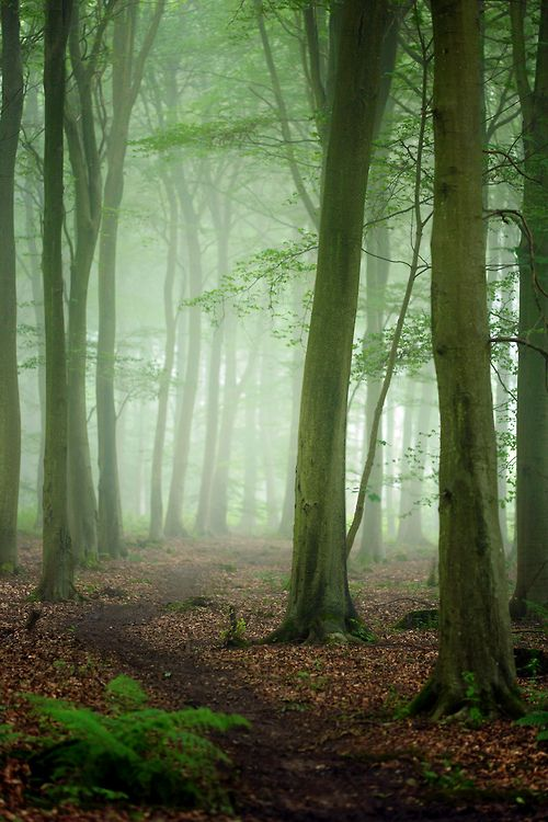 Friston Forest, England- Alan Mackenzie