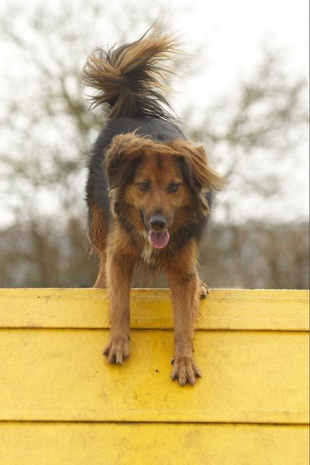 Sponsor Dog Ty Being Active And Climbing Frames At Dogs Trust West London If You Would Like To Sponsor A Dog Like Ty Click On His Dogs Dog Lovers Dogs Trust