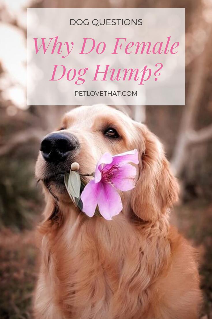07cc1b40753269682001cf0d096e6019 - How To Get A Boy Dog To Hump You