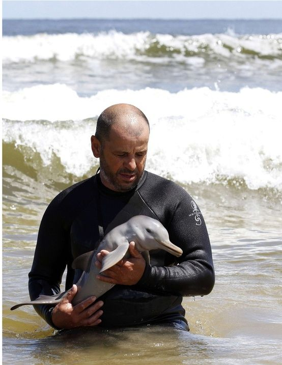 Cradling a baby dolphin