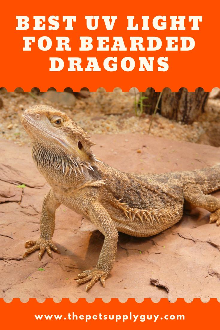 Best Uvb Light For Bearded Dragon Bearded Dragon Lighting