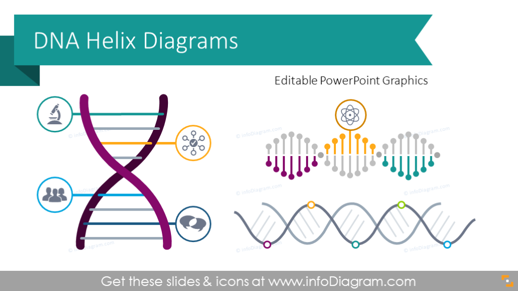 12 Company Dna Ppt Diagrams With Creative Helix Infographic Org Culture Dna Helix Dna Shape Chart