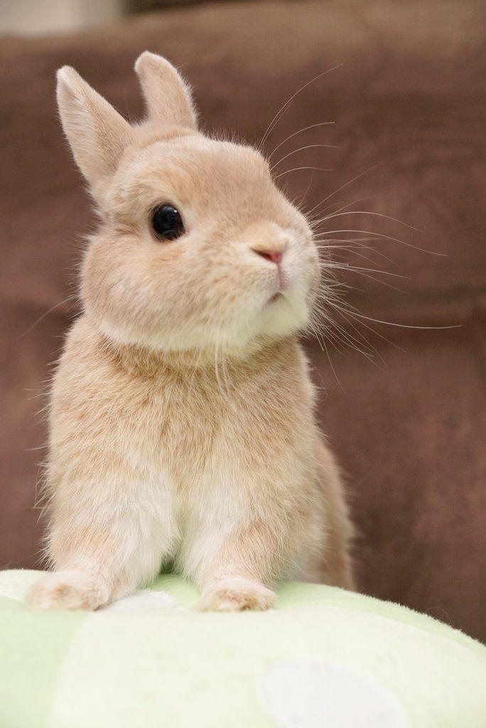 子ウサギ うさぎ ペット かわいいウサギ