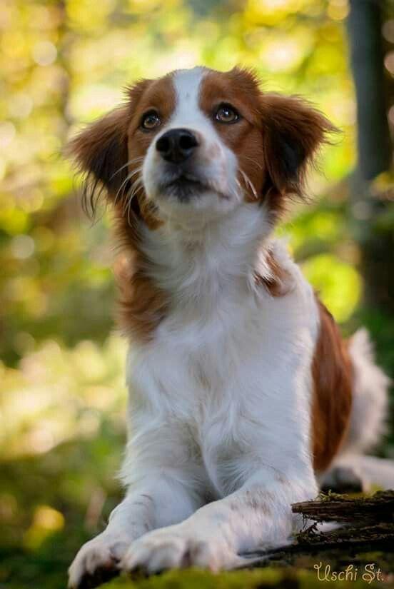 Adopt Dexter On Petfinder Pitbull Terrier Dogs Pitbull Terrier