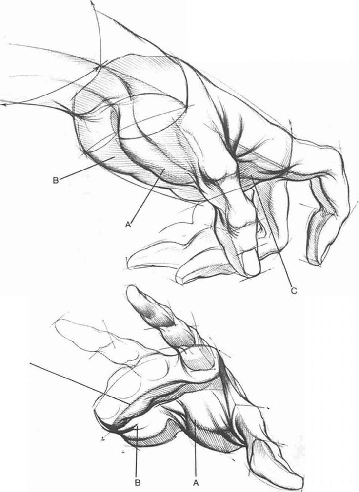Pin by Allison on Drawing/Art Tutorials   Pinterest   Andrew loomis