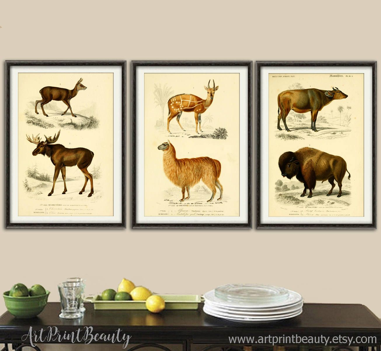 Animals Print - Wall Art Decor - Animals Illustrations - Animals ...