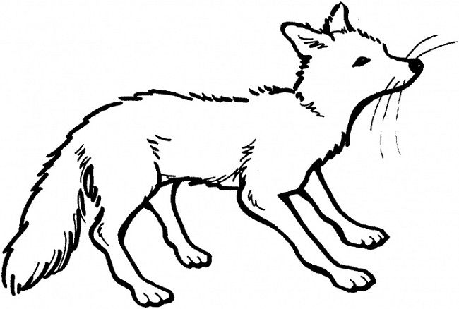Fox The Logo Coloring Pages To Print Fox Coloring Page Animal Coloring Pages Animal Templates