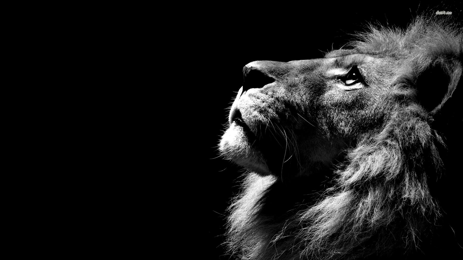 Dark Lion Wallpaper 4k Trick In 2020 Black And White Lion Animal Wallpaper Lion Wallpaper