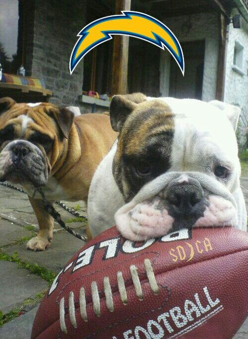 San Diego Chargers Chargers4life Bulldog Puppies Dogs
