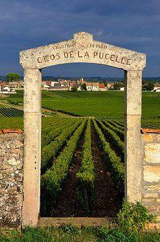 Puligny Montrachet Clos De La Pucelle France Wine Grapes Vines