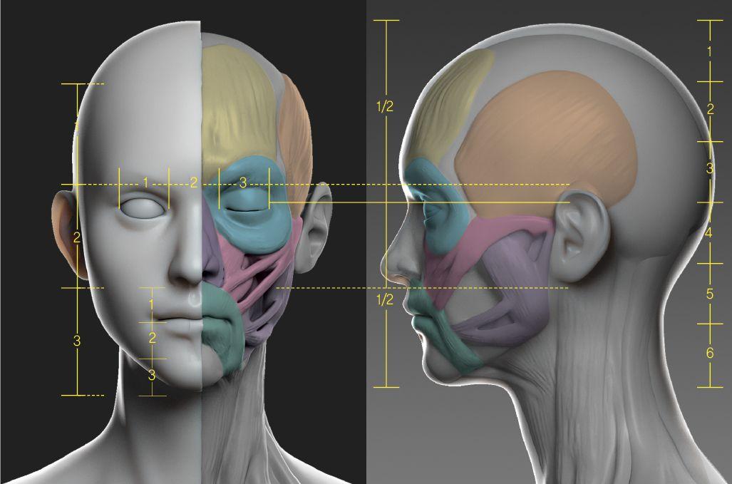 human body study | Human Anatomy | Pinterest